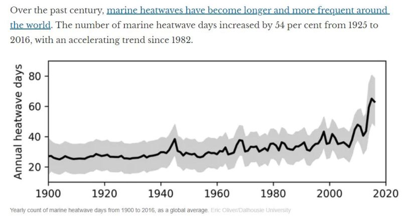trends in marine heat waves