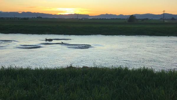 piako-river-dolphins__ResizedImageWzYwMCwzMzhd